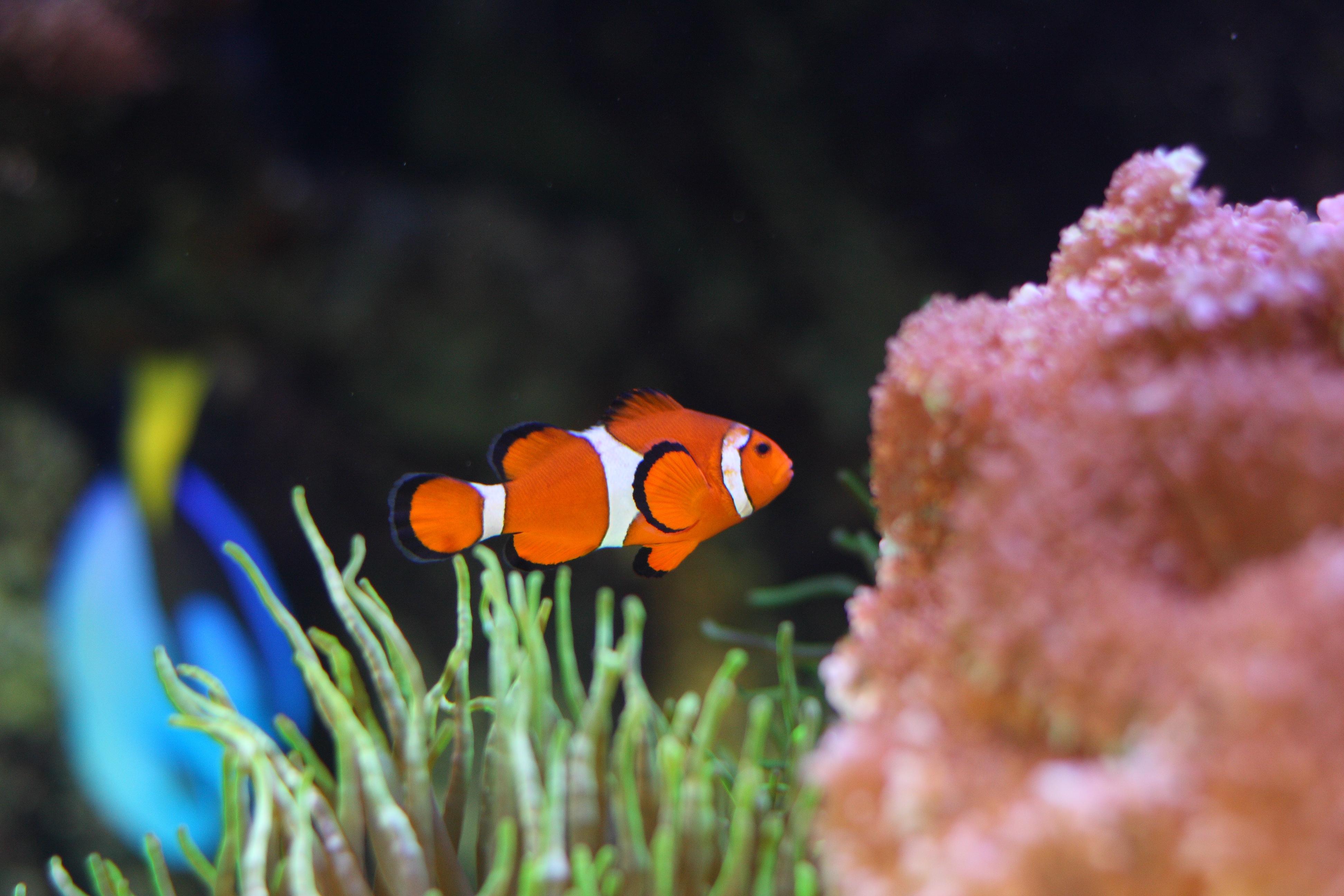 Danmarks Akvarium – Bag fedtede ruder